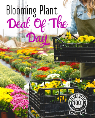 Blooming Plant Deal of the Day from Walker's Flower Shop in Huron, SD