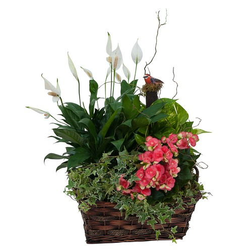 Living Blooming  Garden Basket  from Walker's Flower Shop in Huron, SD