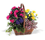 Blooming Garden Basket from Walker's Flower Shop in Huron, SD